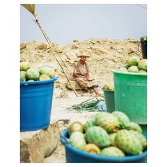Day 909 - The staple fruits in Morocco are more exotic to me than perhaps anywhere I've been. Rather than apples, bananas, and oranges, the easiest fruits to find have been prickly pears (pictured here), desert figs, and pomegranates. Roadside vendors sel