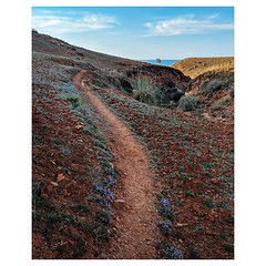 Day 916 - Worn in the iron-rich earth from years of footfall, wonderfully stark paths like this are laced across the Moroccan hills. From the right vantage point you can see dozens of these walkways bursting outward from isolated hillside houses like gian