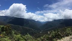 Atemberaubende Aussicht auf den Regenwald