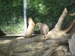 IMG_2619_Burgers_Zoo