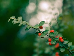 Home garden bokeh | September 23, 2018 | Tarbek - Schleswig-Holstein - Germany