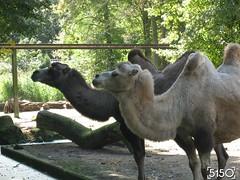 IMG_2666_Burgers_Zoo