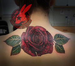 Red Rose Flower 3d Realistic Color Real Tattoo by Jackie Rabbit