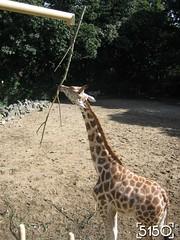 IMG_2489_Burgers_Zoo
