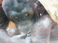 IMG_2634_Burgers_Zoo