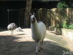IMG_2542_Burgers_Zoo