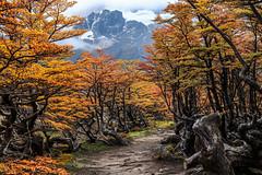 Camino al glaciar (Path to the glacier)