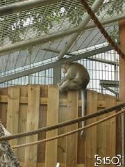IMG_2628_Burgers_Zoo