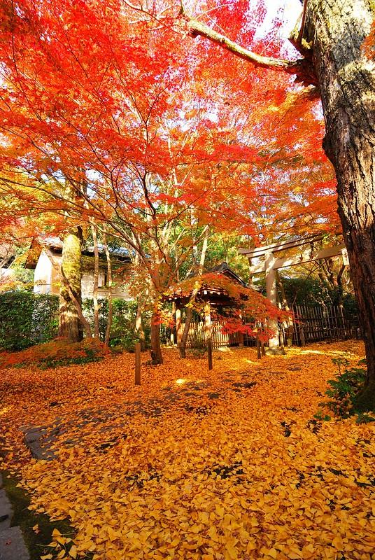 [京都。玩] 絕美秋季黃金地毯-蓮華寺 @ 尋著貓腳印覓食... :: 痞客邦
