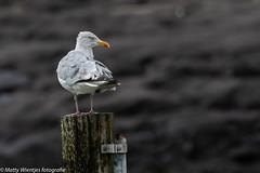 Matty Wientjes thema Vogels Q3-2