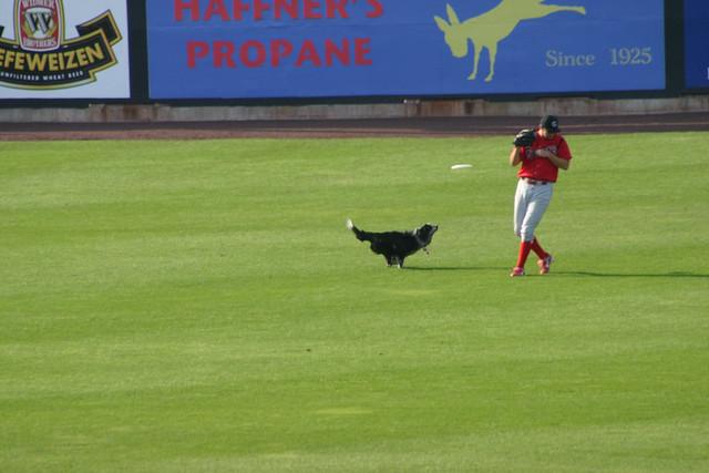 cowering fielder