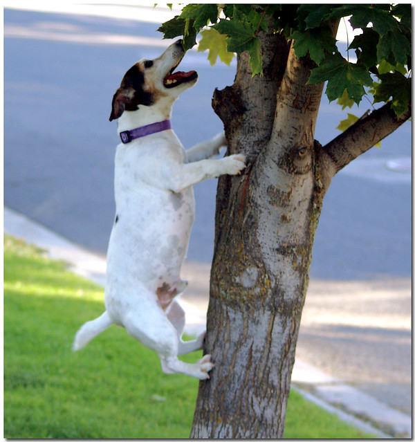 Dogs can climb trees  Flickr  Photo Sharing