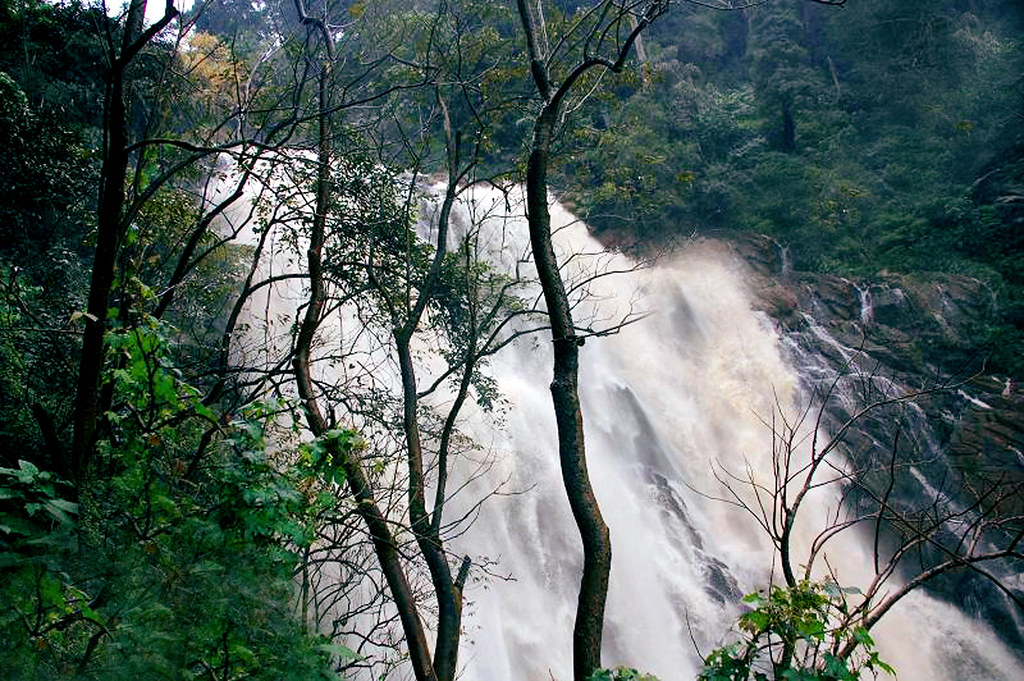 Water Fall in Wayanad