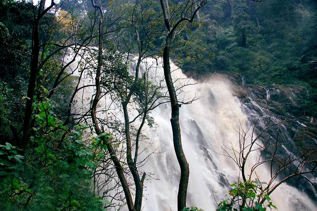 Water Fall in Wayanad