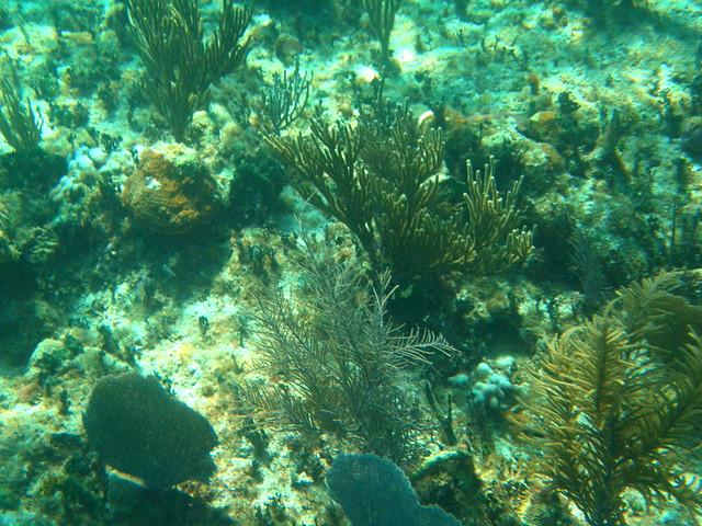 Buceando en Cayo Levisa