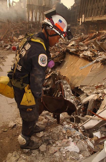 FEMA 5621 911 SAR Dogs  Flickr  Photo Sharing