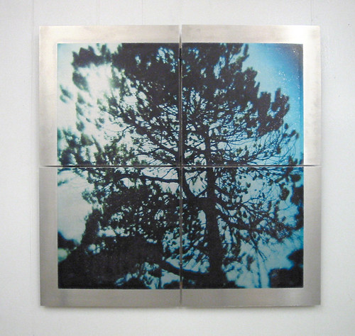 Bog tree - Image transfer on aluminum