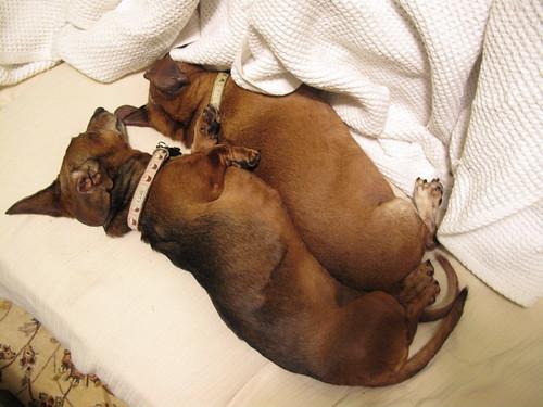 spooning wieners