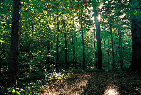 Sacred Grove Mormon, by More Good Foundation, Creative Commons License