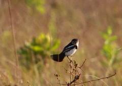 Parque Nacional das Emas  2010 - GO