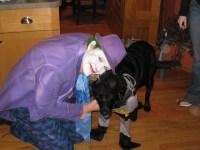 Halloween Joker Costume With Batman Dog Costume | Flickr ...