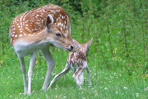 Image result for mother baby animals