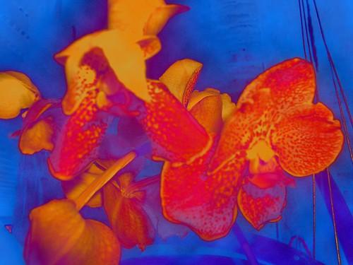 orchids_clouds