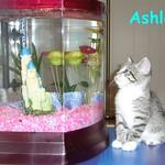 ASHLEY and FISH