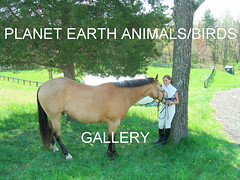 PLANET EARTH ANIMALS/BIRDS group gallery. Showcase galleries on display in PLANET EARTH NEWSLETTER. New Updates ck. them out. More updates as time goes on.