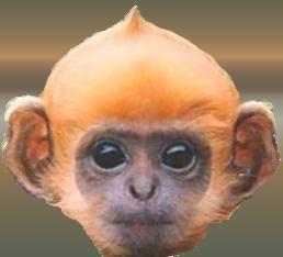 Drupal Code Monkey