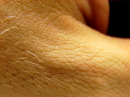 Skin Texture  I took a random closeup of my hand while