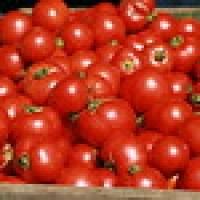 Tomates y pomodoros