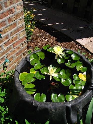 Window Box Herb Gardening Beginners