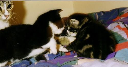 Calvin & Quentin in 1997