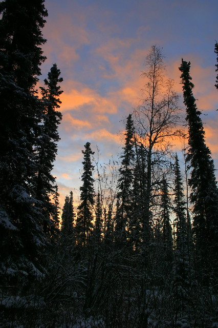 our yard - a fairbanks sunrise