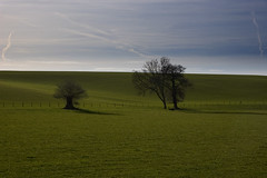 Avon plains