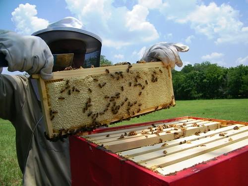 Frame full of honey