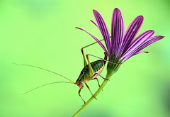 Katydid, by Jim Hoffman