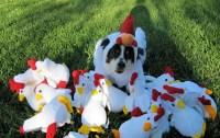 Dog Chicken Costume | Flickr - Photo Sharing!