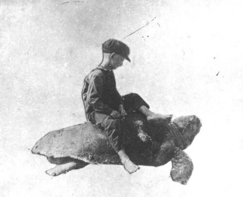 Thomas Brown on a Loggerhead turtle