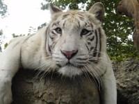 Zootopia: Fábulas del Siglo XXI