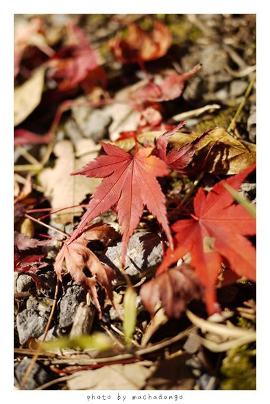 地上的落葉