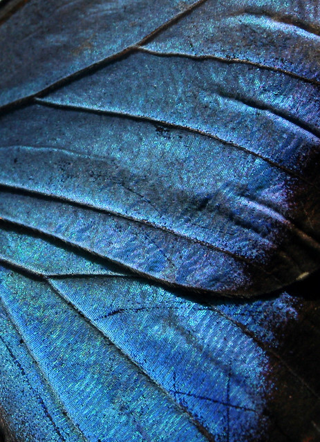 wing texture  Flickr  Photo Sharing