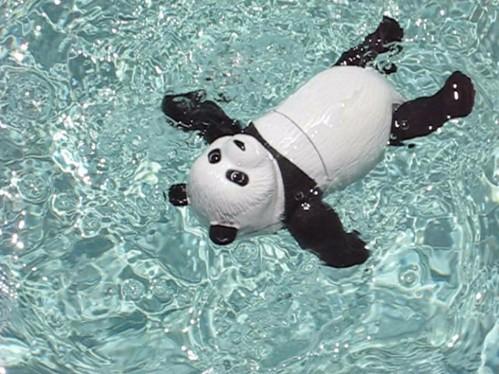 Swimming Panda