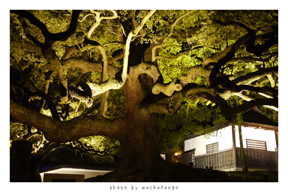 門前的大樹