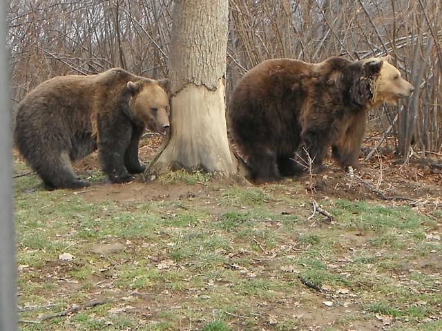 Family Eco tourism in Romania