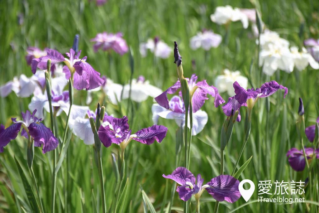 《东京景点推介》堀切菖蒲园:无料赏花名所,沿途加映紫阳花盛开美景