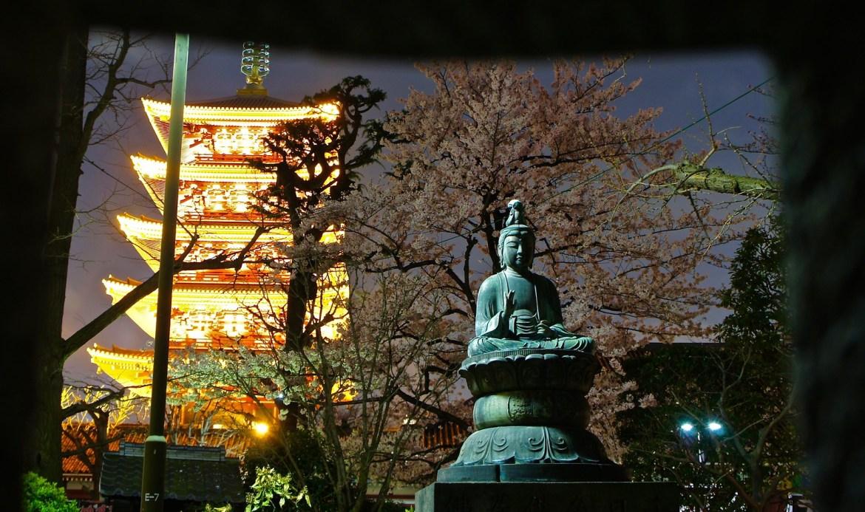 Asakusa Yozakura - Night time illumination of cherry blossoms