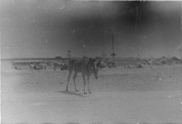 Found Film:  35mm Ektachrome
