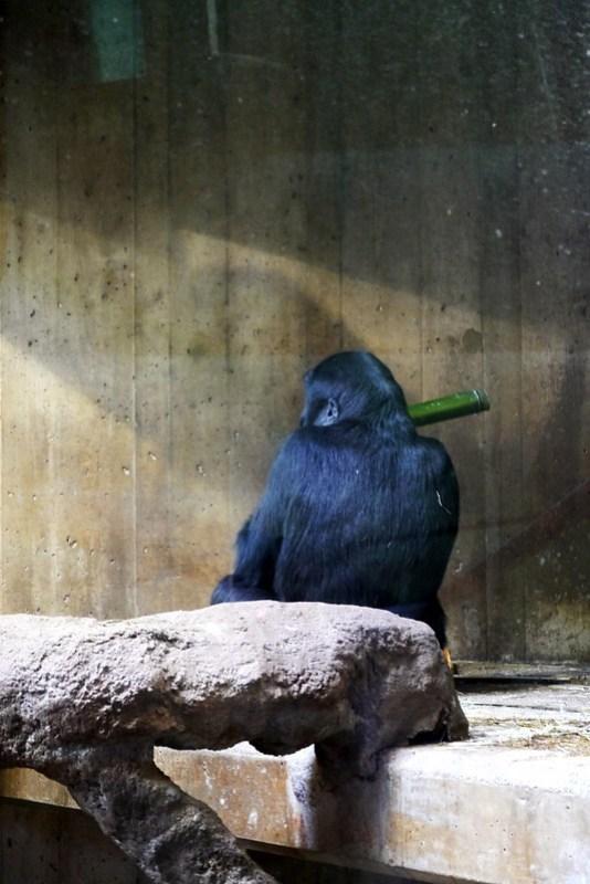 20130304 National Zoological Park, Washington DC 107
